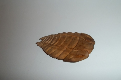 R.I.P TRILOBITES, 521 MILLION YEARS AGO TO 250 MILLION YEARS AGO. NEVER FORGET